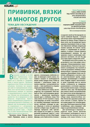 Британские котята шиншилла Kitten british