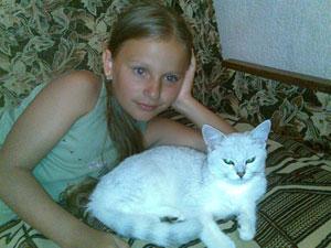 Британские котята шиншилла Kitten british shorthair: cinchilla