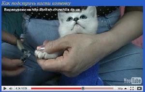кошки видео уход за кошками