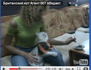 Видео британский кот