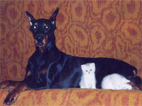 As cat with dog