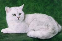 Cyrus Silver of Britain